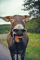Onload? Sei kein Esel, delegate!
